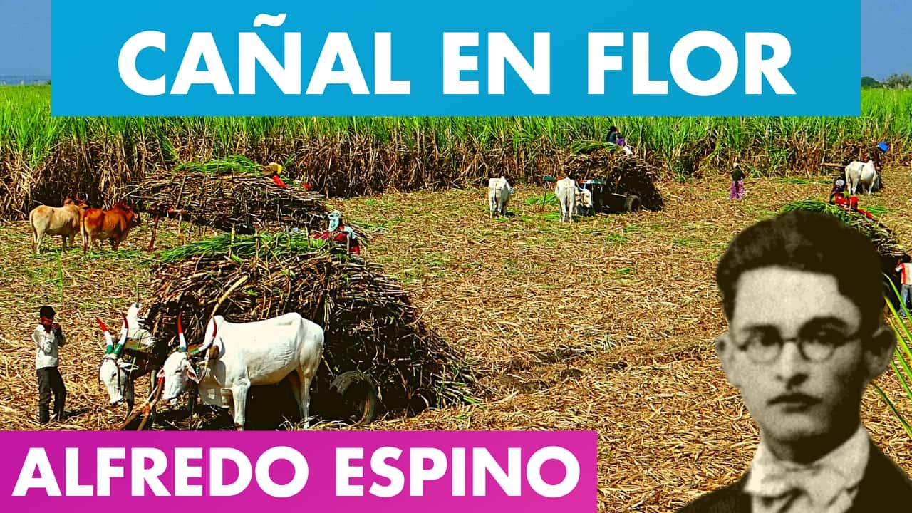 En este momento estás viendo CAÑAL EN FLOR ALFREDO ESPINO 🎋💮   Poema Cañal en Flor de Alfredo Espino 🍯   Valentina Zoe Poesía