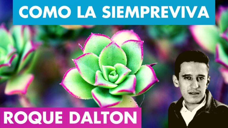 Lee más sobre el artículo COMO LA SIEMPREVIVA 🌷🌄 ROQUE DALTON | Mi Poesía es como La Siempreviva Roque Dalton | Valentina Zoe