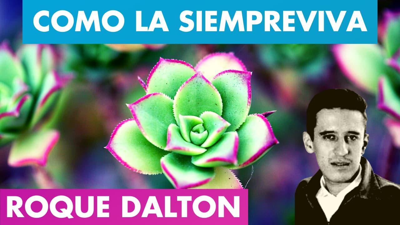 En este momento estás viendo COMO LA SIEMPREVIVA 🌷🌄 ROQUE DALTON   Mi Poesía es como La Siempreviva Roque Dalton   Valentina Zoe