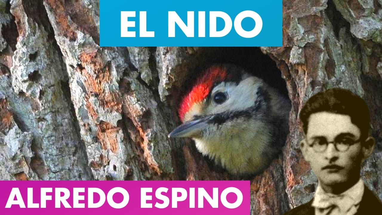 En este momento estás viendo EL NIDO Alfredo Espino🐦🌲   El Nido Poema de Alfredo Espino🌄   Poemas de Alfredo Espino Valentina Zoe