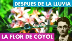 Lee más sobre el artículo AL ENTREABRIRSE LA FLOR DE COYOL ALFREDO ESPINO 🌸 | Después de la Lluvia Alfredo Espino 🌦️ | Poesía