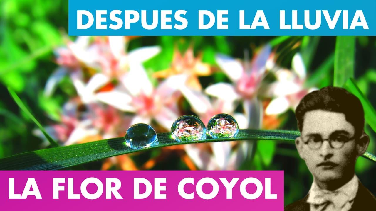 En este momento estás viendo AL ENTREABRIRSE LA FLOR DE COYOL ALFREDO ESPINO 🌸   Después de la Lluvia Alfredo Espino 🌦️   Poesía