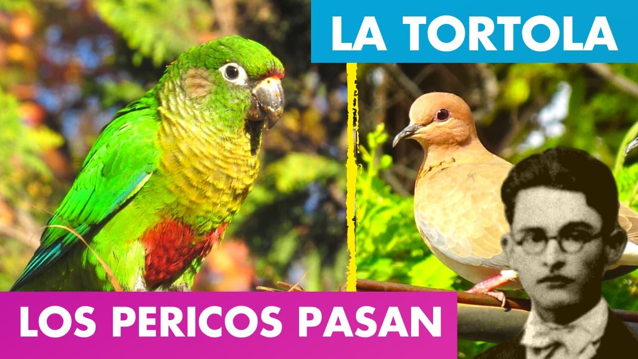 En este momento estás viendo LOS PERICOS PASAN ALFREDO ESPINO🦜🌤️ | La Tortola Alfredo Espino🕊️🌄 | Poemas de Alfredo Espino